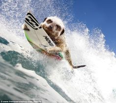 Surf's up: September calls for a cool-off from all that action with a trip to the beach - to hit the waves on a surfboard