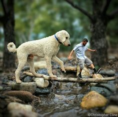 Giant Golden Doodle Goes On The Best Adventures With His Human