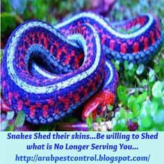 Be willing to Shed the old