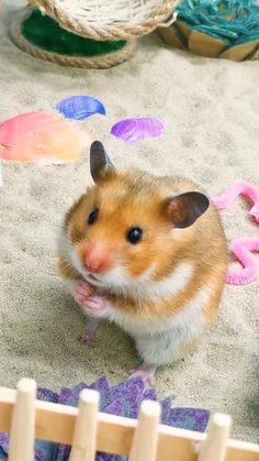 Hamsters Video, Hamsters As Pets, Funny Hamsters, Baby Hamster, Hamster Care, Cute Animal Videos, Cute Animal Pictures, Cute Little Animals, Cute Funny Animals