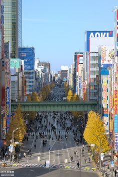 中央通り 2011年12月18日
