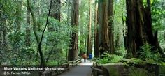 Muir Woods national redwoods monument