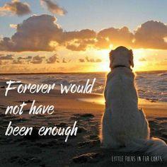 Teddie xxxxx always in my heart. Miss you forever xxxxxx #DogQuotes