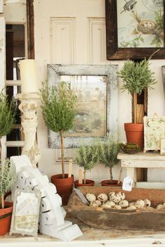 Rosemary Topiaries:  Spring Vintage Market Days - Vignettes & Collections