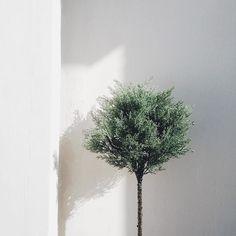 simplicity is beautiful.  via @polinaluna  #inspiration #minimal #menosesmas #vscocam #vscogood #hellospring #holaprimavera #bbloggers #mallorcablogs #cosmeticasana #ecobeauty #ecoluxury #greenbeauty #palma #mallorca #mallorcastyle #palmalife #mallorca2016 #mallorcatestim #mallorcastyle #luxmallorca #lifestyle #estilodevida #estilo #beautylover #instabeauty #igersmallorca #beautyaddict #lifestyleblogger #sileandtherabbit by sileandtherabbit