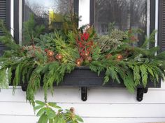 WINTER window boxes - I like the different types of evergreen here.