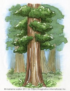 Redwood trees by Marianne Walker.... Tutorial for using Copic Opaque White