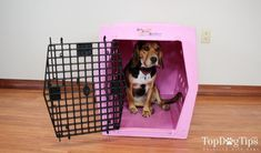 Results 1 - 24 of 146 - Petco Classic Dog Crates. You & Me Folding Dog Crate. OxGord's dog crate is available in 6 sizes – smal Plastic Dog Kennels, Plastic Dog Crates, Small Dog Breeds, Small Dogs, Cheap Dog Cages, Dog Travel Crate, Cheap Dog Kennels, Wire Crate