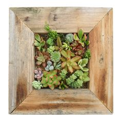 #AmericanMade SUCCULENT WALL PLANTER KIT - Made in San Diego, CA. What a beautiful decoration for any wall in the house. In my house, this would hang in the bathroom. Wall Planters, Succulent Wall Planter, Rustic Planters, Living Wall Planter, Vertical Planter, Patio Wall, Hanging Planters, Succulent Cuttings, Succulents Garden