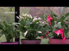 Diy jardin on pinterest succulents propagate succulents and christmas cactus - Entretenir un cactus ...