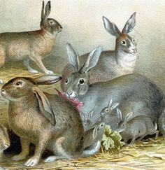 A chromolithograph showing various types of rabbits tThe names of the creatures are written below the chromolithograph, but unfortunately, these are Bugs Bunny's German-speaking cousins). Printed in Germany in 1892.  Much care was taken in printing this plate; thus, the colours are incredibly brilliant and the images razor sharp. Printing is of the highest quality.