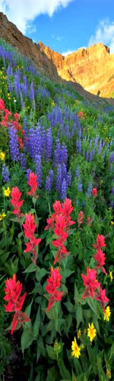 Wasatch Wildflowers on The Wasatch Range by parkflavor / deviantart. Wasatch Range stretches approximately 160 miles (260 km) from the Utah-Idaho border, south through central Utah.