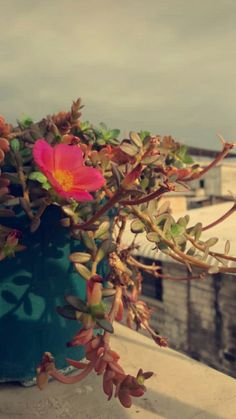 Aesthetic Roses, Aesthetic Themes, Aesthetic Pictures, Tumblr Photography, Girl Photography Poses, Girly Pictures, Nature Pictures, Tumblr Wallpaper, Nature Wallpaper