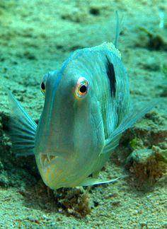 Razorfish by vanveelen, via Flickr