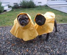 Olive needs a raincoat like this... :)