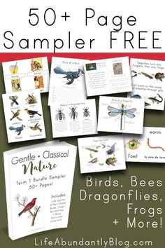 If you are plannin g a bee bird dragonfly or frog unit study you won't want to miss this sampler of 50 pages of FREE printable activities worksheets flashcards and more! Terre Nature, Nature Activities, Educational Activities, Nature Study, Nature Nature, Nature Crafts, Forest School, Nature Journal, Homeschool Curriculum