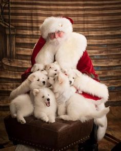Merry Christmas you filthy animal. 49 Dog photos all dressed up for there Christmas cheer. So many cute puppies in here that will warm your Grinchy heart. Christmas Puppy, Christmas Animals, Santa Christmas, Christmas Time, Cute Puppies, Dogs And Puppies, Doggies, American Eskimo Dog, Samoyed Dogs