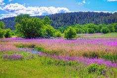 pictures of springtime scenes | Christian Begeman: Late Spring Scenes in South Dakota