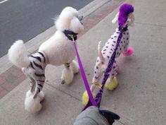Funky Poodles ... spots vs. stripes