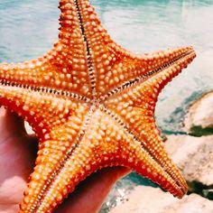 starfish // instagram @kylie_francis