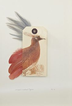Ghosts of Gone Birds, Choiseul crested Pigeon, bu Rebecca Jewell