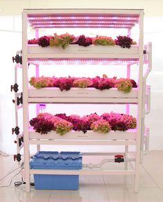 Aquaponics installation