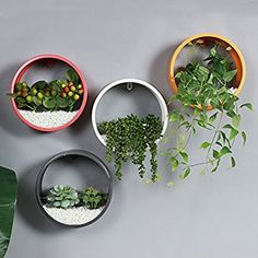 House Plants Decor, Plant Decor, Glass Garden, Garden Pots, Monstera Obliqua, Small Balcony Garden, Hanging Pots, Indoor Plants, Diy And Crafts