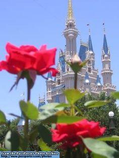 Disney World Castle Main Street USA | Magic Kingdom - Cinderella Castle from the Rose Garden - PassPorter ...