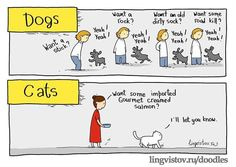 Funny pictures about Cats Vs. Dogs In A Nutshell. Oh, and cool pics about Cats Vs. Dogs In A Nutshell. Also, Cats Vs. Dogs In A Nutshell photos. Super Cute Kittens, Kittens Cutest, Cats And Kittens, Funny Cats, Funny Animals, Cute Animals, Baby Animals, Dog Cat Tattoo, Crazy Cat Lady