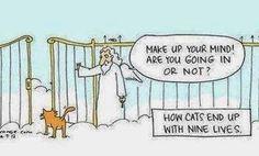 cat has nine lives.jpg