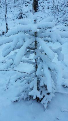Endlich Schnee ❄❄