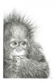 Marvelous Drawing Animals In The Zoo Ideas. Inconceivable Drawing Animals In The Zoo Ideas. Animal Drawings, Pencil Drawings, Art Drawings, Chats Tabby, Art Carte, Baby Drawing, Drawing Drawing, Monkey Drawing, Art Original