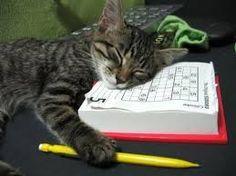 Résultats de recherche d'images pour «drole de chat»