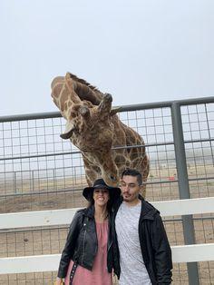 Malibu Wine Safari and Beer Garden Malibu Wine Safari, Malibu Wines, Beer Garden, Giraffe, Lion Sculpture, Felt Giraffe, Giraffes