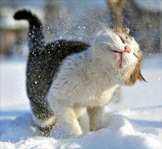Gatito  disfrutando de la nieve ❄❄❄