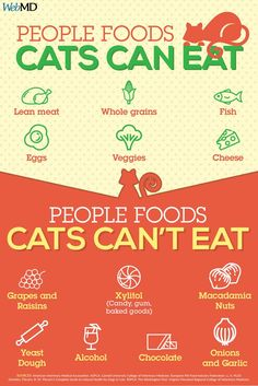 Slideshow: People Foods Cats Can Eat Can you give your cat table scraps? Find out which foods are safe to feed your feline and which ones to avoid. The post Slideshow: People Foods Cats Can Eat appeared first on Katzen. Foods Cats Can Eat, Homemade Cat Food, Best Cat Food, Cat Nutrition, Nutrition Tips, Health Tips, Cat Hacks, Cat Care Tips, Pet Care