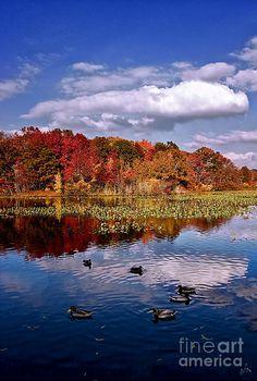 ✮ Mill Pond, NY me encanto