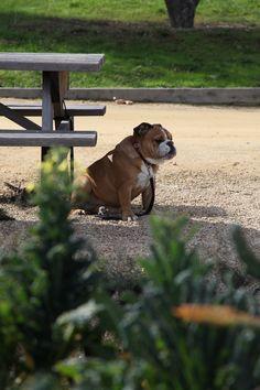 in the organic garden Carmel Valley Ranch, Roxy, Organic Gardening, Acre, Cute Animals, Pretty Animals, Mornings, Cutest Animals, Cute Funny Animals