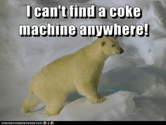 Dump A Day Attack Of The Funny Animals - 32 Pics The Polar Bear commercials are the best ones.