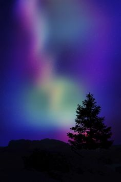 Aurora Borealis, Canada - I just love purples, blues and silhouettes - LOVE Canada! Cool Pictures, Cool Photos, Beautiful Pictures, Northen Lights, Natural Phenomena, Beautiful Sky, Science And Nature, Natural Wonders, Natural World