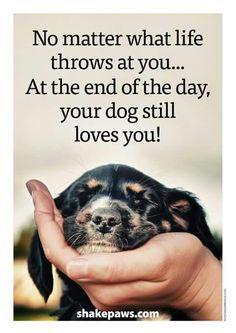 Your dog always love you! - Your dog always love you! Your dog always love you! Puppy Quotes, Dog Quotes Love, Animal Quotes, Dog Qoutes, Baby Quotes, Funny Dog Sayings, Funny Pet Quotes, Dog Lover Quotes, Cute Puppies