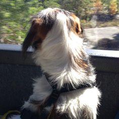 heididahlsveen:  #atsjoo on the bus (ved Hvaler)