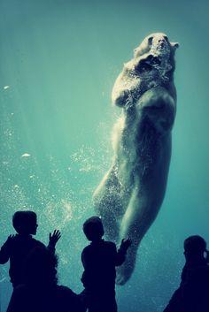 wolverxne: Polar Bear | by: [NoralyB]