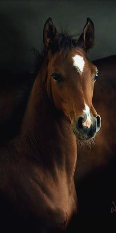 ♔ Beautiful foal... (h) #equine #horses #foals #animals