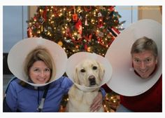 """Top 10 awkward holiday pet photos"" \\ Couple and their dog wearing cones"
