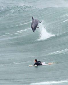 イルカかっこいい