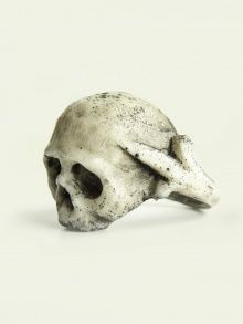 White Lilian Skull | NOT JUST A LABEL