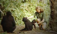 Jane review – wondrous footage lights up Goodall's Tarzan dream | Film | The Guardian