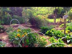 An introduction to permaculture design principles featuring a stunning, abundant food forest designed by Erik Ohlsen of Permaculture Artisans permacultureart...