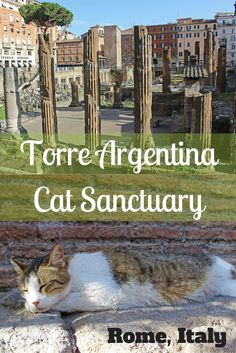 Torre Argentina Roman Cat Sanctuary